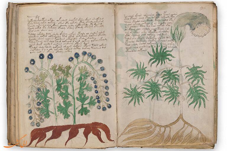 voynich-manuscript-facsimile-edition